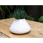 Tab B Plant Pot & Storage Dish