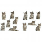 Mini Fun Cats Wall Art Stickers